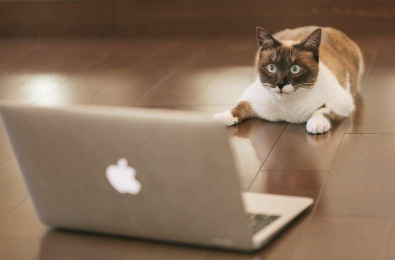 ノートパソコンを見て驚く猫