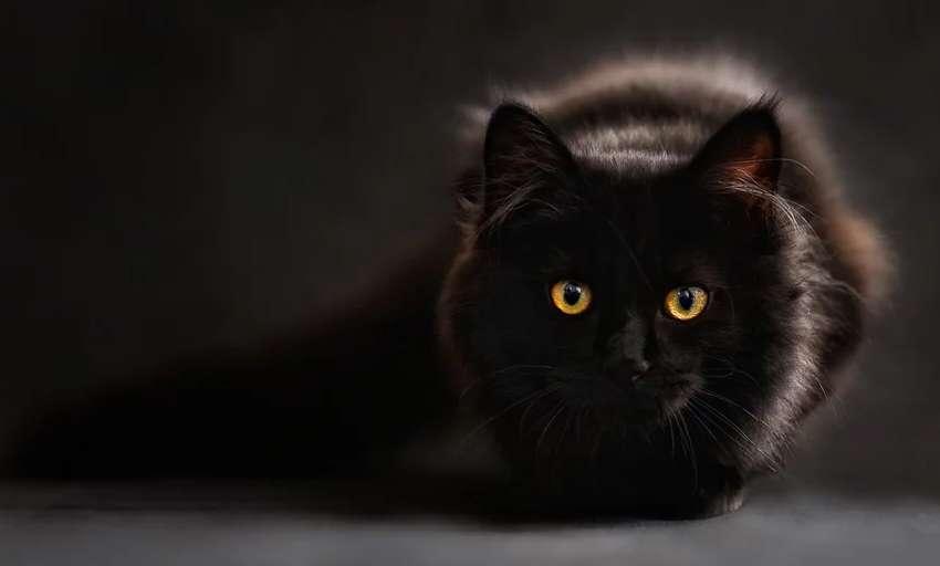 こちらをじっと見つめている黒い猫